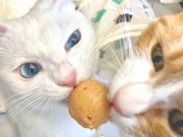 【BLUE CAT CAFE】問屋町にあるオシャレな猫カフェ♪美味しいケーキを食べながら可愛い猫ちゃんたちに癒されるオススメスポット。