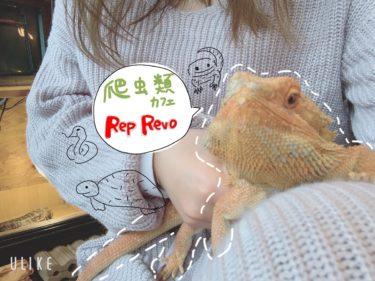 【爬虫類カフェ RepRevo】爬虫類好きに朗報!岡山県唯一の爬虫類カフェが倉敷に!!苦手でも最後は可愛く見えてきちゃうアットホームなカフェで、蛇やトカゲと触れ合える!!