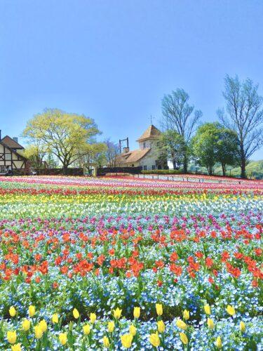 【おかやまフォレストパーク ドイツの森】今週末はココに行こう♪ハイジのブランコ&お花畑がインスタ映え!